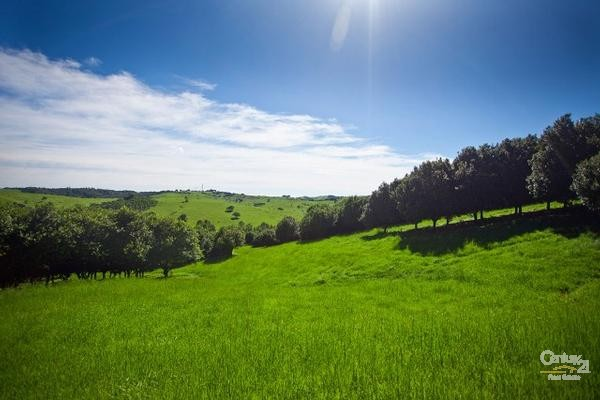 Rural Orchards Property for Sale in Bangalow NSW 2479