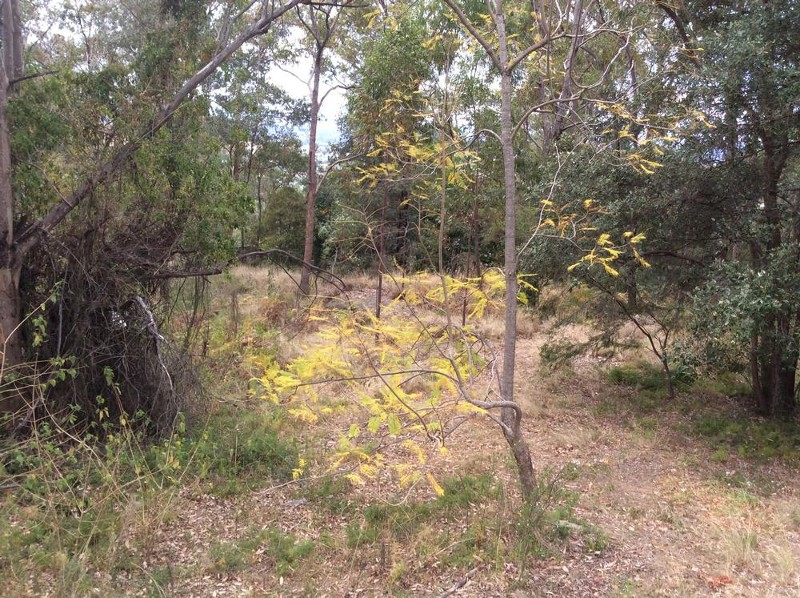 19 Bridgeview Crescent, Mount Riverview - Land for Sale in Mount Riverview