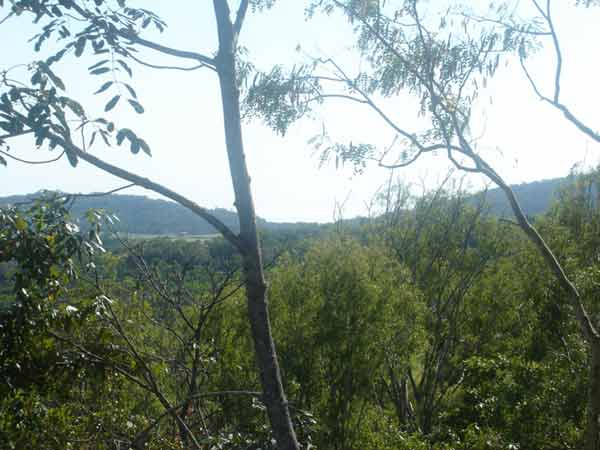 Rainforest Surrounds - Land for Sale in Shannonvale QLD 4873