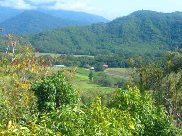 19 Proposed Lots - Land for Sale in Shannonvale QLD 4873