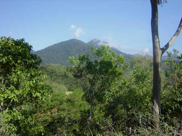 Build Your Dream Home - Land for Sale in Shannonvale QLD 4873