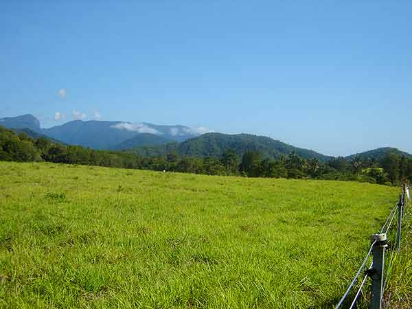 Lifestyle Choice - Land for Sale in Shannonvale QLD 4873