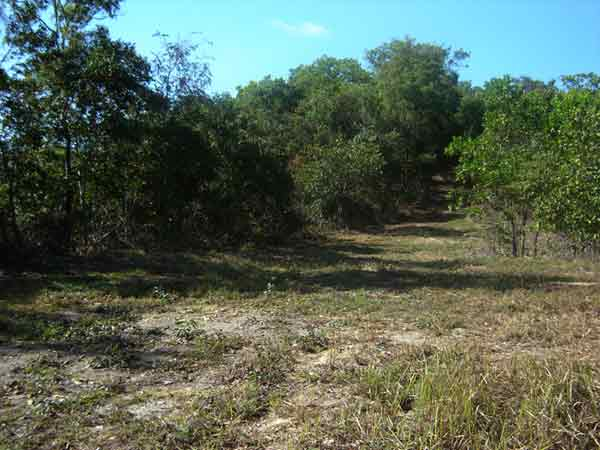 Time for a green change - Land for Sale in Shannonvale QLD 4873