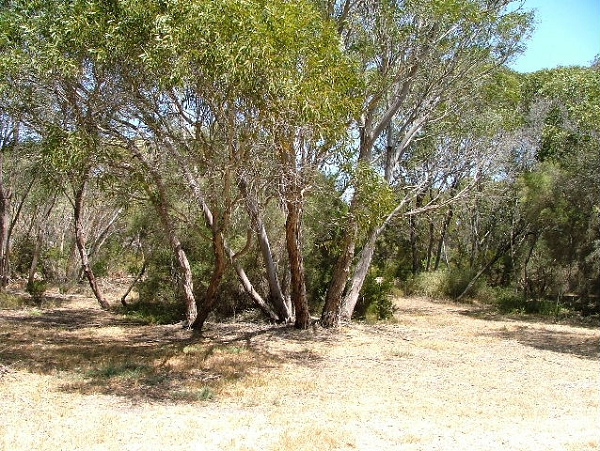 Lot 5 Third Street, - Land for Sale