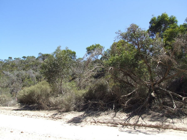 Lot 195 Island Beach Road, Island Beach - Land for Sale in Island Beach