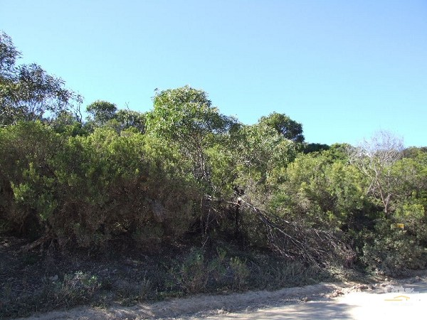 Lot 126 Island Beach Road, Island Beach - Land for Sale in Island Beach