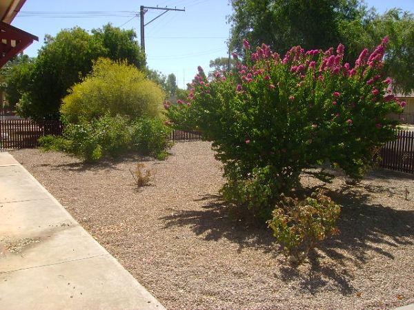 Well established front yard in number 19 - 19 / 21 Trelawney Street, Port Pirie - House for Sale in Port Pirie