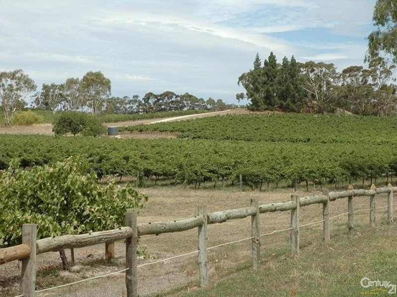 Vineyards close by - 3 Hawker Street, Yacka - House for Sale in Yacka