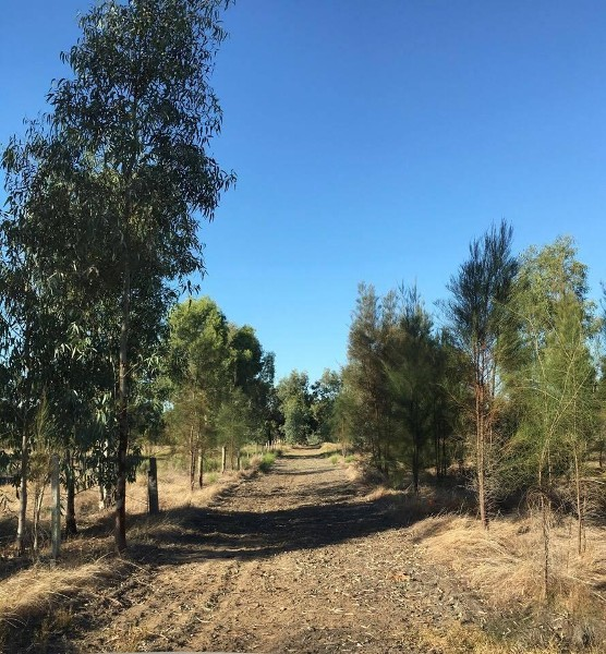 lot 20 Haines Road, Baldivis - Specialised Rural Property for Sale in Baldivis