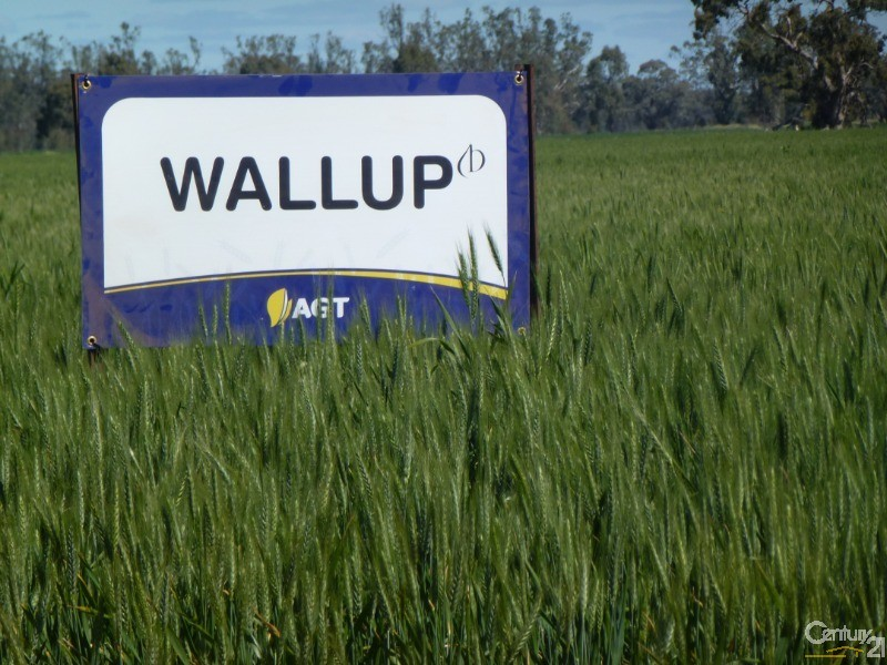 Access to the latest seed technologies. - 0 Superior Seed Co. Barham Rd, Deniliquin - Rural Property for Sale in Deniliquin